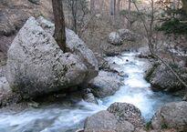 Ялтинський_гірсько-лісовий_природний_заповідник_Олина.jpg