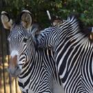 Зоопарк Лиссабона