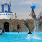 Дельфинарий Ейска