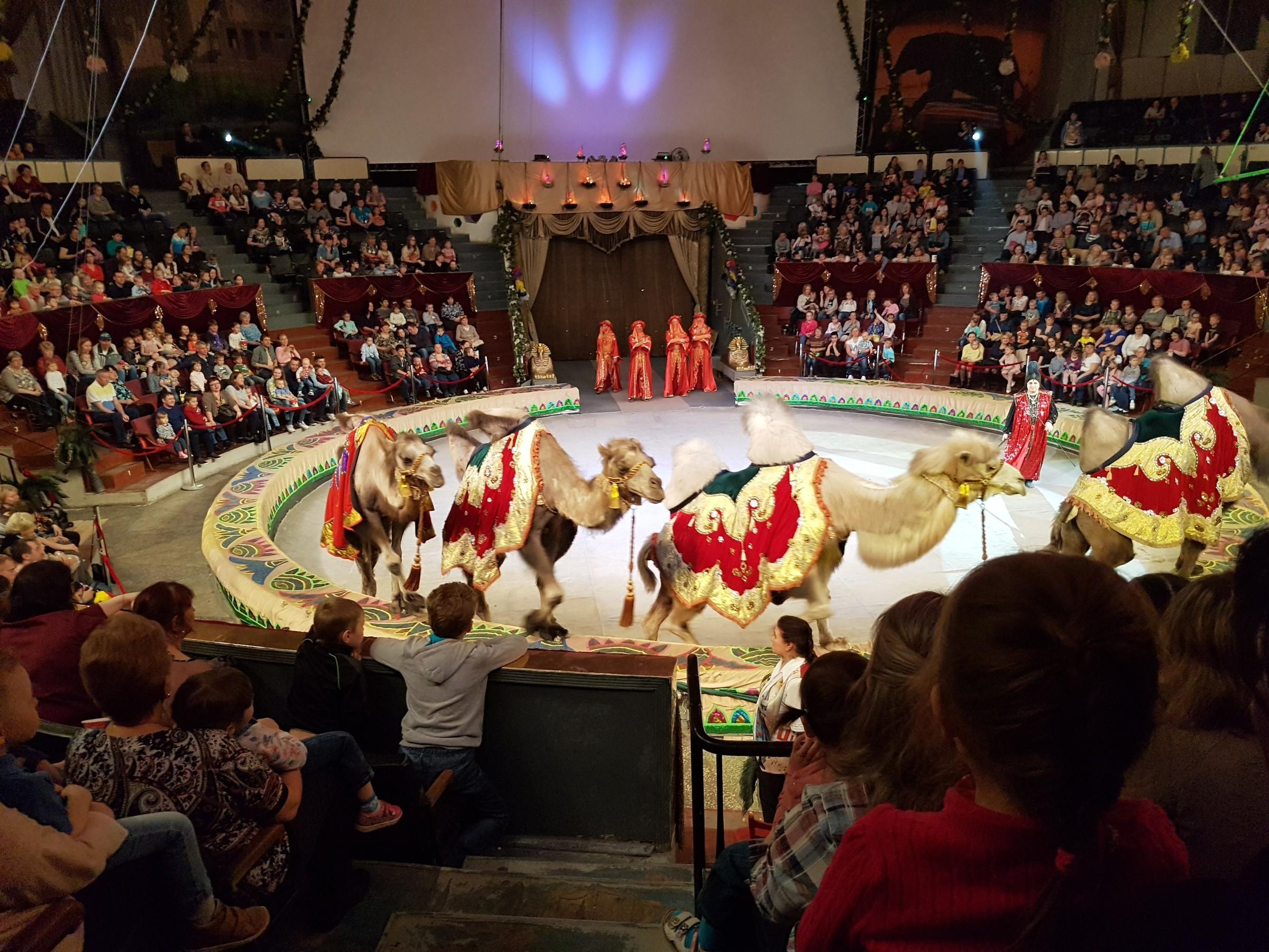 Воронеж цирк официальный сайт купить билет большой театр афиша на ноябрь 2016 цена