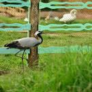 Парк птиц в Крыму