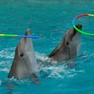 Грозненский дельфинарий