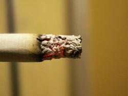 В Лос-Анджелесе открылся отель для курящих марихуану
