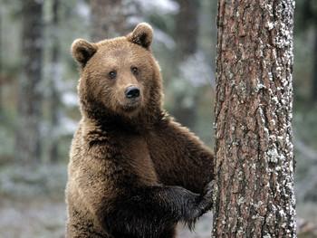 Заповедник Столбы закрывают для туристов из-за медведей