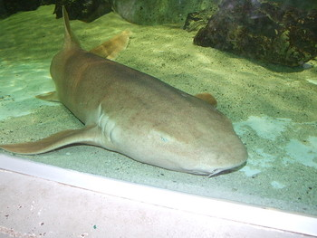 На Багамах на туристку из США напала акула, считавшаяся безопасной
