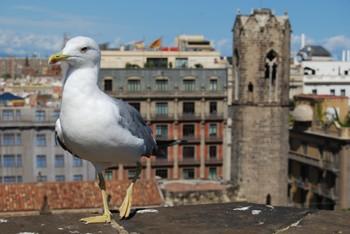 В Барселоне чайки нападают на людей