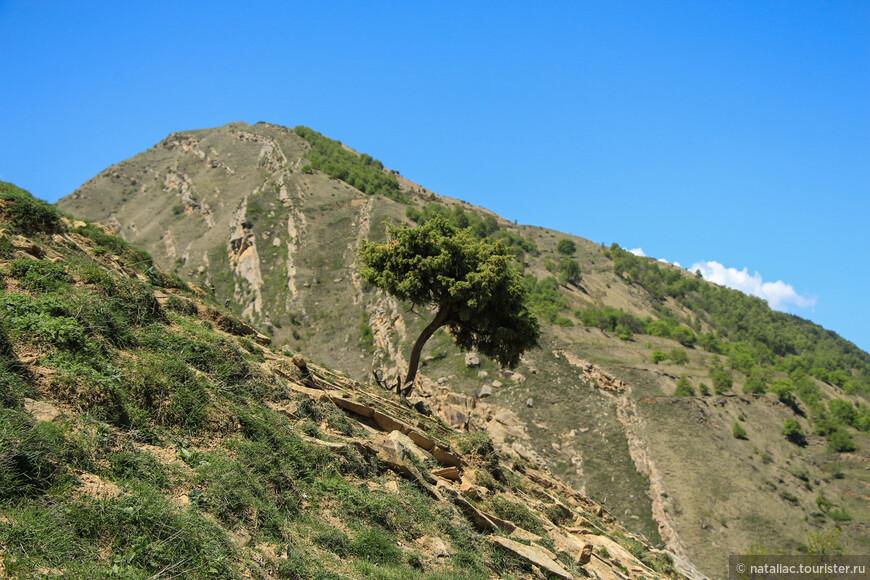 Невероятно живописно, даже не смотря на то, что тропу мы потеряли и какое-то время просто спускались по склону.