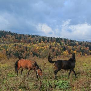 Встречаем осень в горах. День 2-й