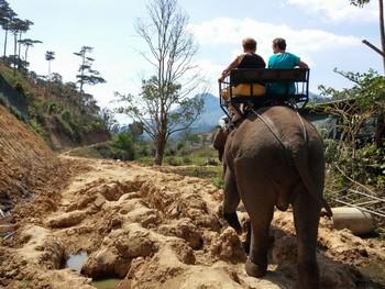 Туристам запретили прогулки на слонах во вьетнамском нацпарке