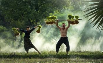 Вьетнам предлагает гостям заняться сельскохозяйственным туризмом
