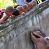 Зоопарк Янгона