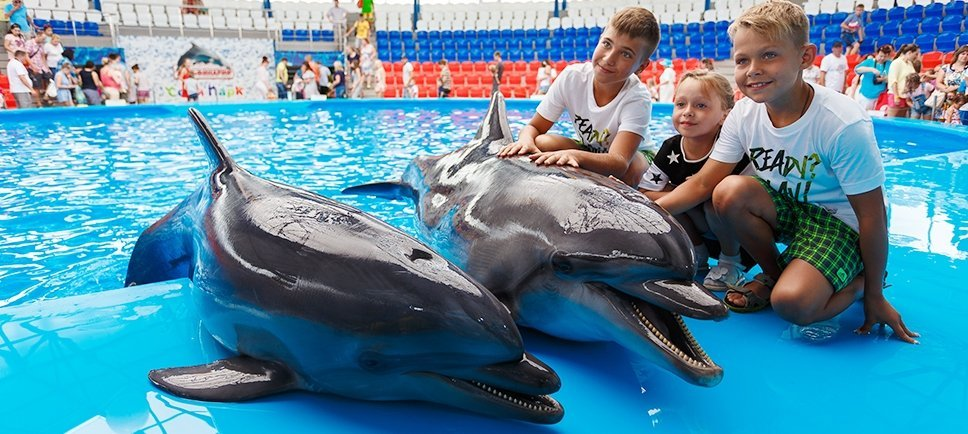 украсить фото из дельфинария красноярск если тебе удастся