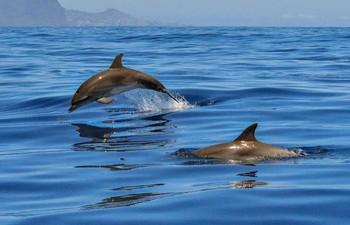 В Сочи проходит Всемирный день китов и дельфинов