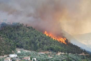 Лесные пожары в Греции: погибли около 50 человек