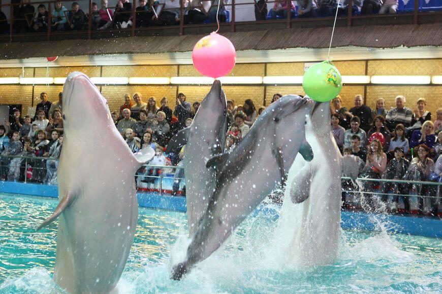 Стоимость работы дельфинарий в ярославле часы продать синте часы