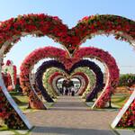 Сад чудес и Сад бабочек в Дубае