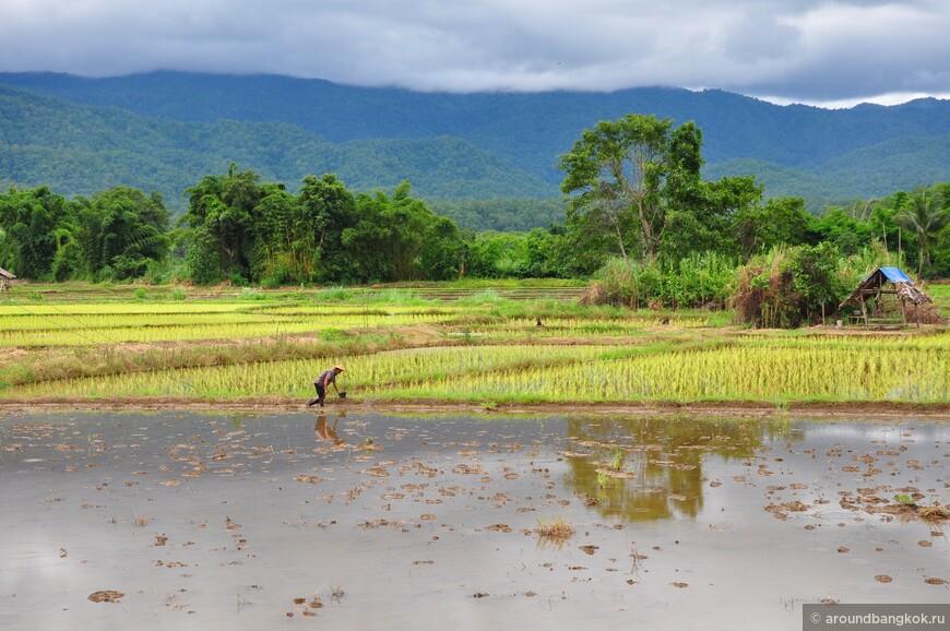 Крестьянин в рисовом поле занимается непостижимым в столь жаркий день.