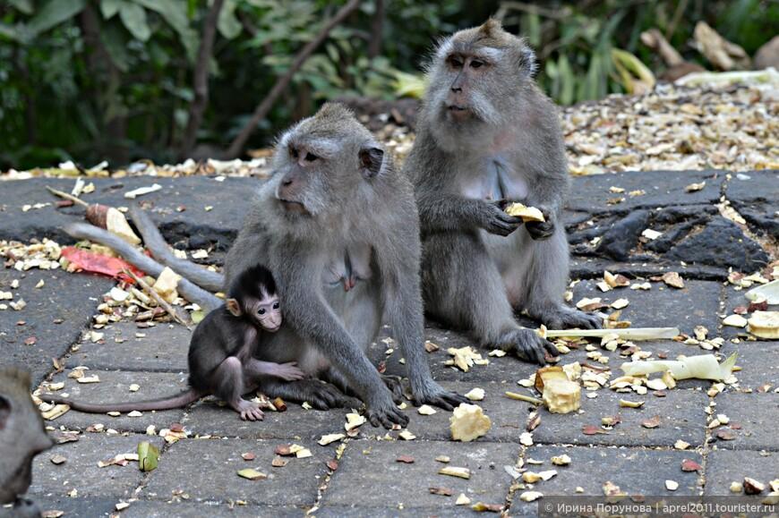 Недалеко от Убуда находится храмовый комплекс и лес обезьян. Это место является одновременно заповедником и священными местом для балийцев.