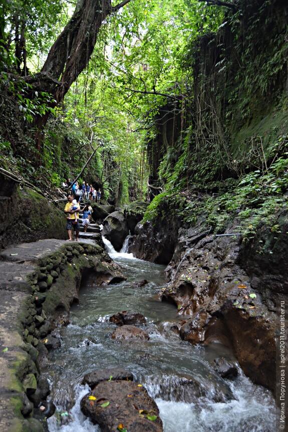 Лес обезьян - настоящие джунгли. Огромные многолетние деревья, которые служат домом для обезьян, поражают своей магической красотой.