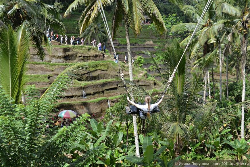 Развлечение на рисовых террасах - огромные качели