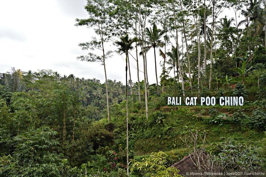 На плантации можно увидеть весь процесс превращения кофе – от ягод до привычных обжаренных зёрен и молотого кофе, расфасованного по пачкам для продажи.