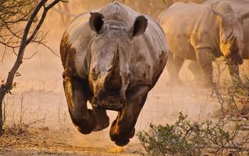 В Мексике носорог напал на джип с туристами