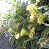 По дороге на леваду можно увидеть кактус