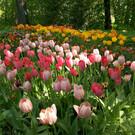 Ботанический сад Твери