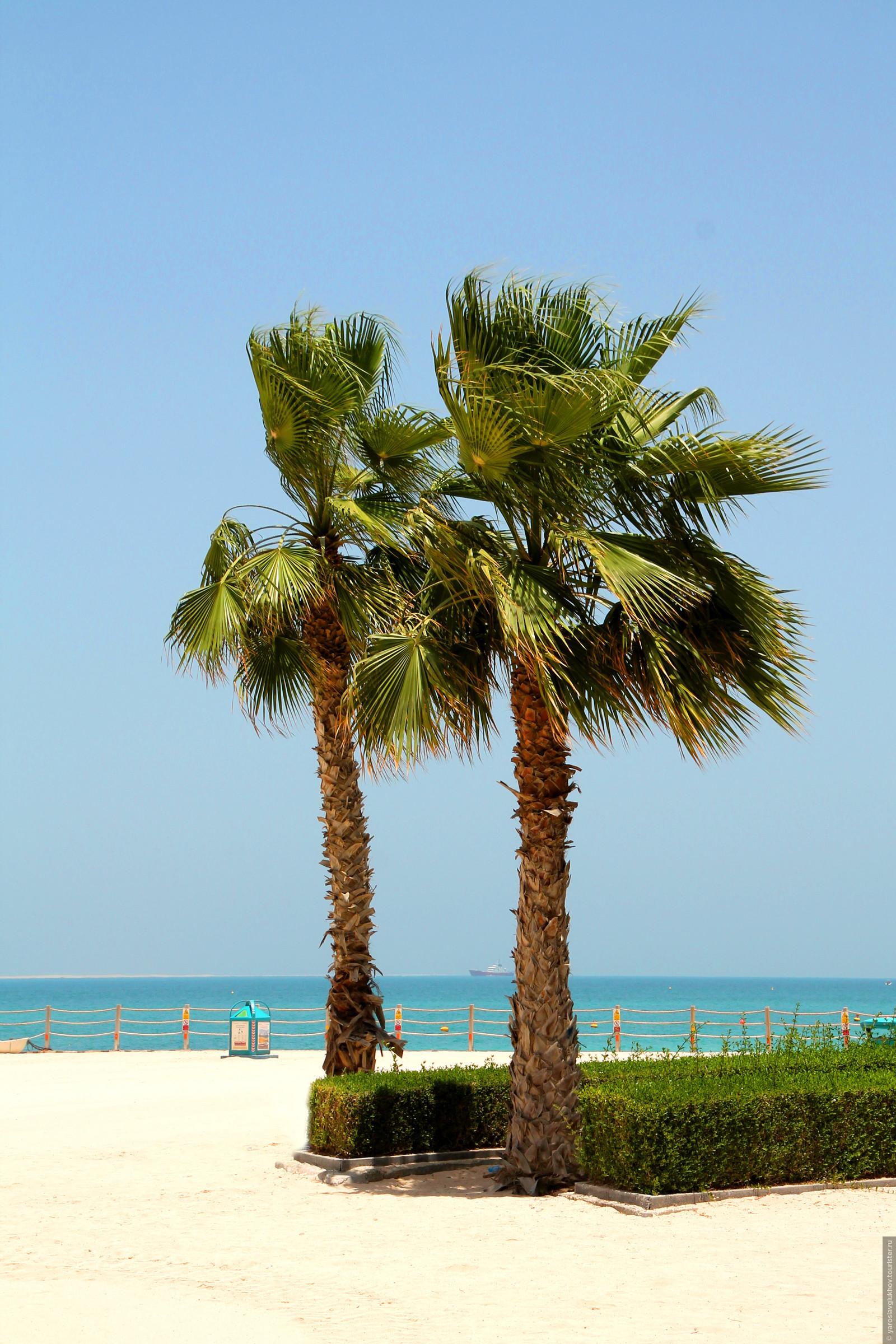 Кит бич пляж дубай на карте дом за рубежом купить недорого у моря
