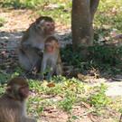 Остров обезьян Хон-Лао