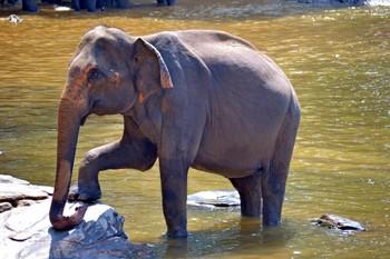 На Шри-Ланке слон напал на машину с туристами