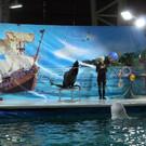 Дельфинарий в Уфе