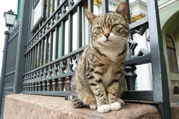 Лучшие достопримечательности для любителей кошек