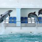 Дельфинарий в Набережных Челнах