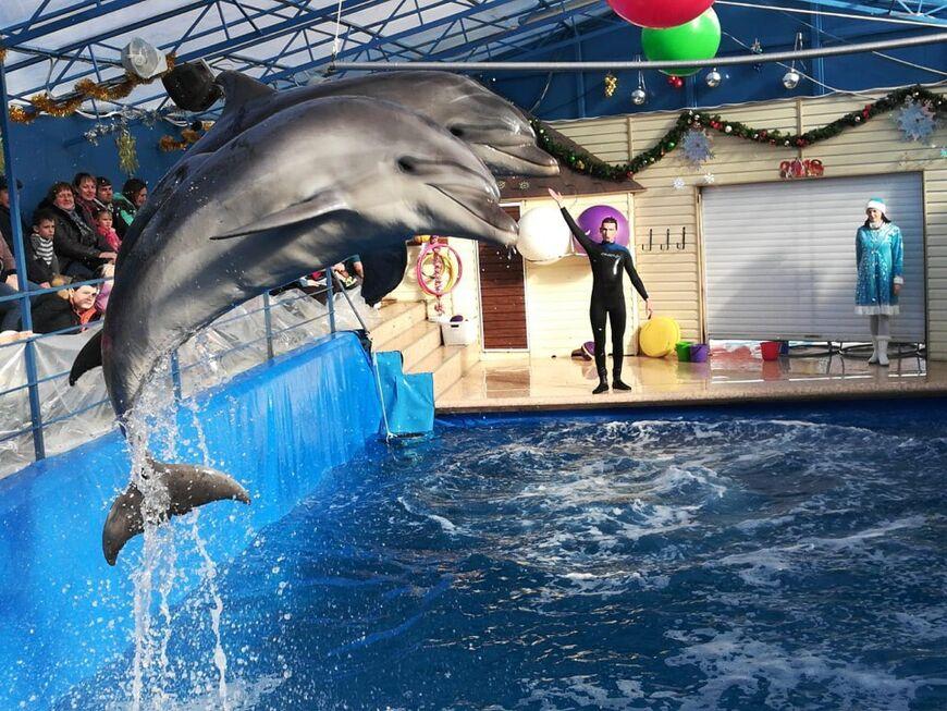 Часы стоимость билетов работы дельфинарий радо алматы в часы продам