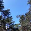 Небо танцующего леса