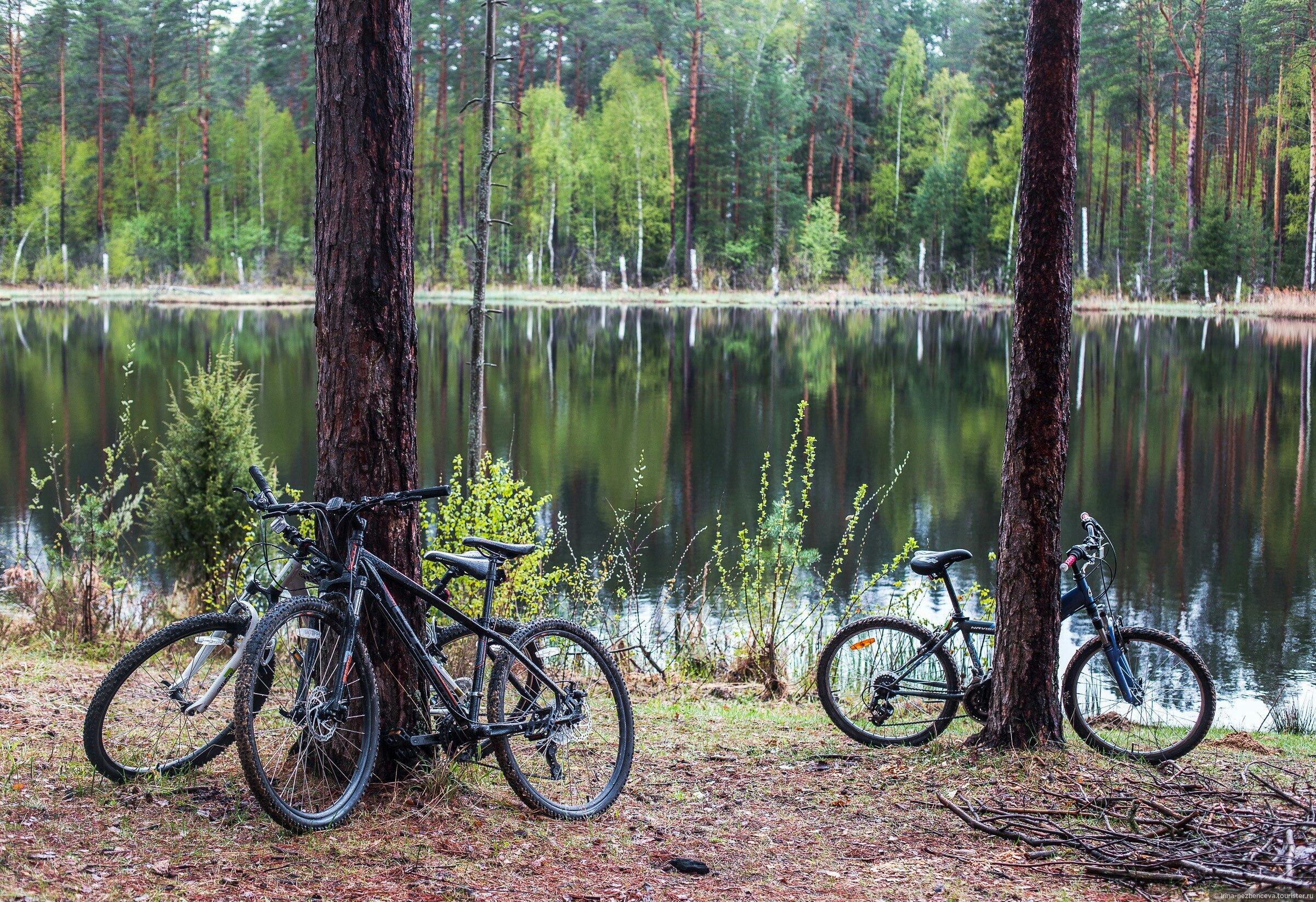 Святое ( озеро, Москва ) Википедия