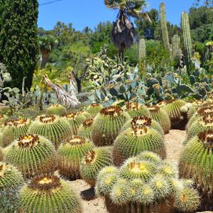 Ботанический сад «Пинья де Роса»