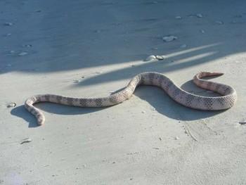 Туристов предупреждают о ядовитых змеях на пляжах Таиланда