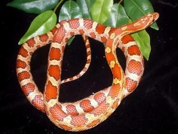 В «Шереметьево» в багаже пассажира были найдены два десятка змей