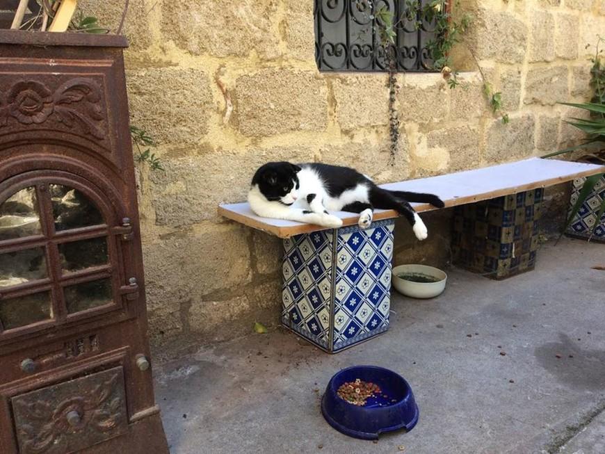 коты и кошки - хозяева в городе. А таких толстых собак,как в Родосе, я нигде не видела.
