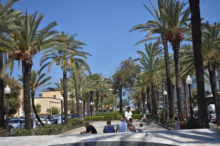 Пальмовая аллея. Финиковые пальмы, по ней мы каждый день ходили купаться в Средиземном море.