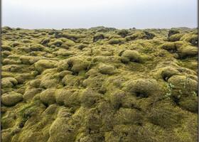 Со временем огромные поля вулканических формаций были покрыты  мхом и так как дорога проходит посередине этого мохнатого поля, то конечно же мы останавливаемся .