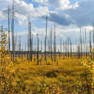 Национальный парк «Водлозерский»