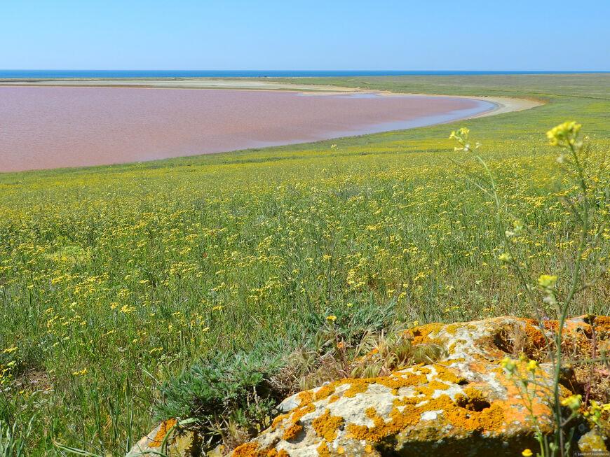 Розовое озеро в Крыму Фото где находится Евпатория Керчь Как доехать можно ли купаться