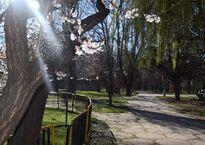 Гагаринский парк весной