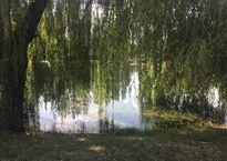 Гагаринский парк в Симферополе