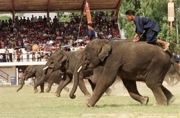 В Таиланде пройдёт Фестиваль слонов