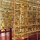 Музей океанографии