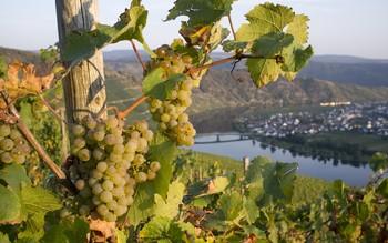 В Ростовской области пройдёт фестиваль вина «Донская лоза»